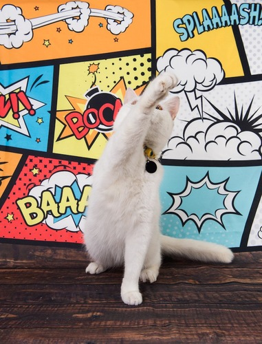 片手を上げてパンチする白猫