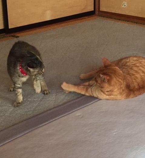 2匹で手を出し合っている猫たち