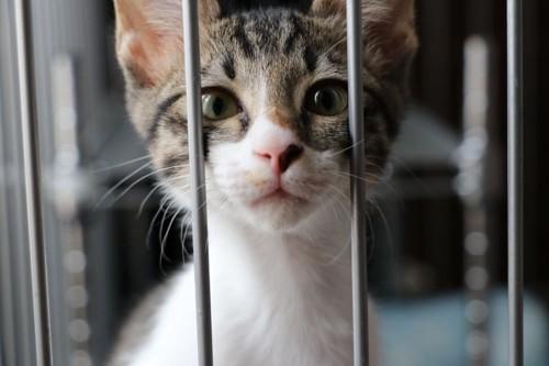 ケージの隙間に鼻を入れている猫