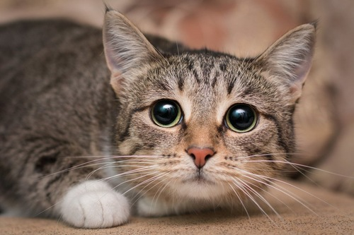 目を丸くした猫