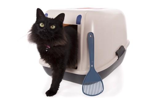 トイレから出てきた長毛猫