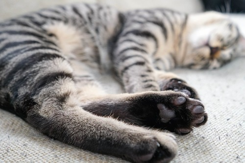 眠っている猫の足元アップ