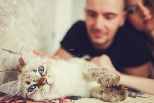横になっている猫を撫でるカップル