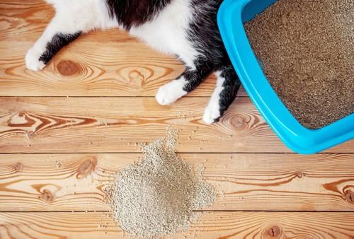 猫砂と猫の足