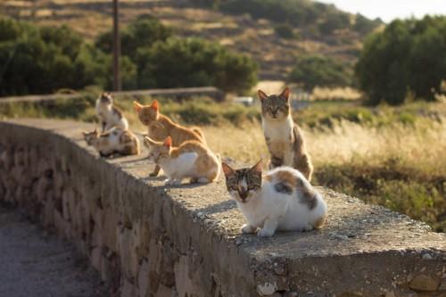 猫勢ぞろい
