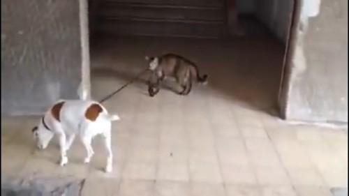 脇道に逸れる犬
