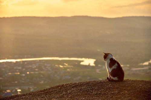 夕暮れに川辺にいる猫