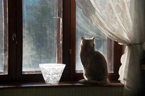 窓の外を見る猫と白いレースのカーテン