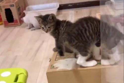 仲良く遊ぶ子猫たち