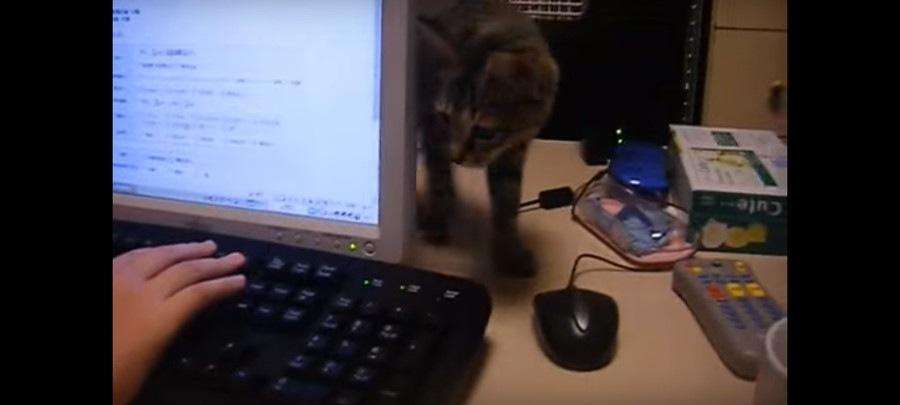 ジッと指をみる猫