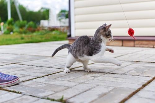 外でおもちゃで遊ぶ猫