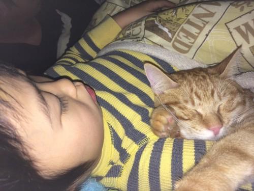 腕枕で眠る子猫