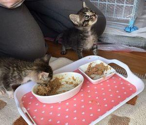 2匹一緒に食べている