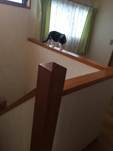 #ストレスフリーな猫#