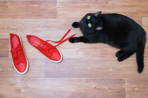 靴紐で遊ぶ黒猫