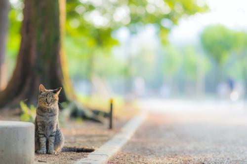 道路脇の木のもとに座る猫