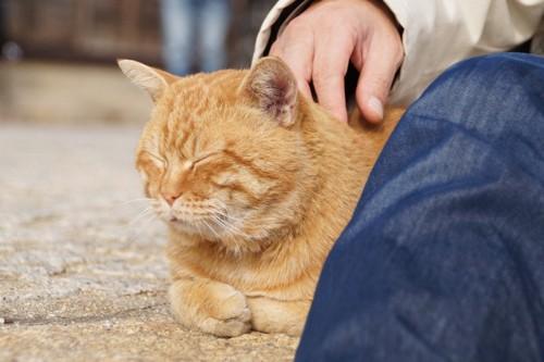 昼下がりの猫
