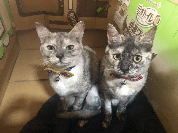 色違いの首輪をしている双子猫
