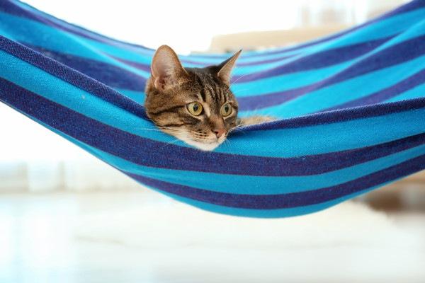 窓際のハンモックに乗る猫