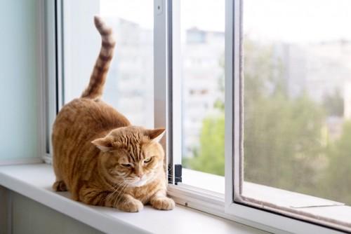 窓の近くにいる猫