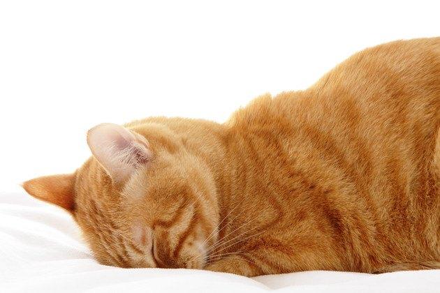 変わったポーズで眠るネコ