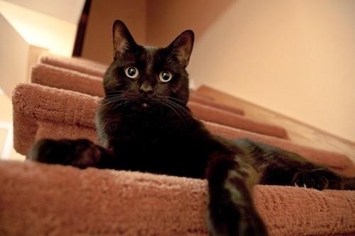 階段にいる黒猫