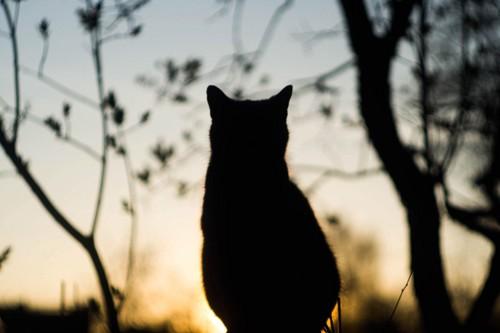 空と猫のシルエット