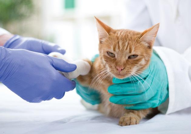 白血球が少ない猫