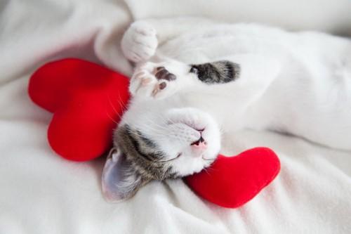 安心して寝る猫