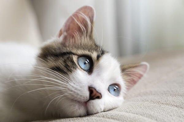 目線を送る猫
