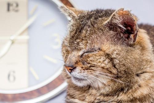 時計の前で眠る老猫