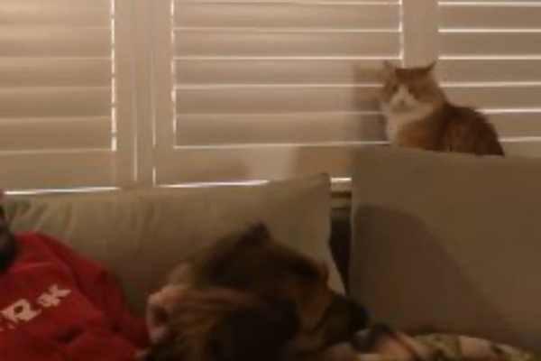 男を見つめる猫