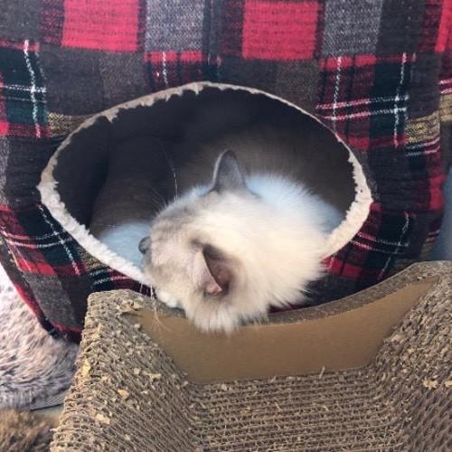 ベッドを買ってもらった猫