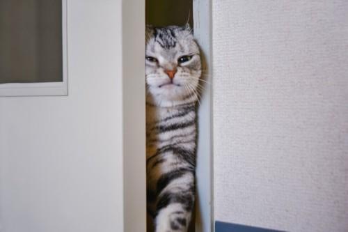 ドアの隙間を入ろうとする猫