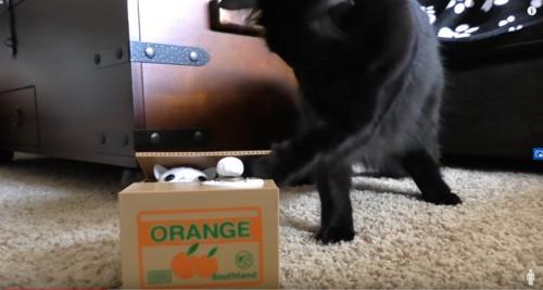 貯金箱に前足を入れる黒猫