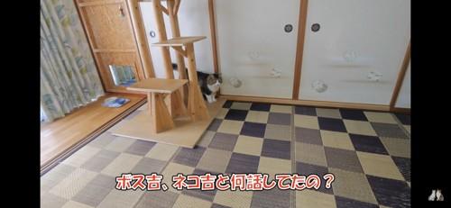 キャットタワーの後ろで止まる猫