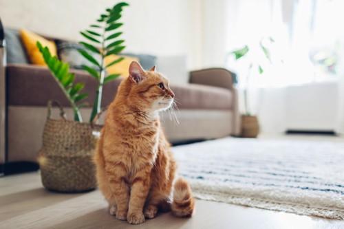 よそ見をする猫