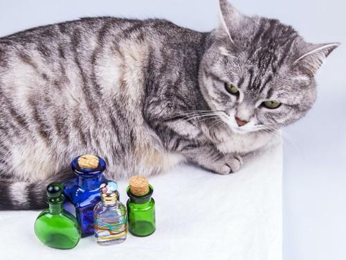 香水瓶と嫌そうな顔をした猫