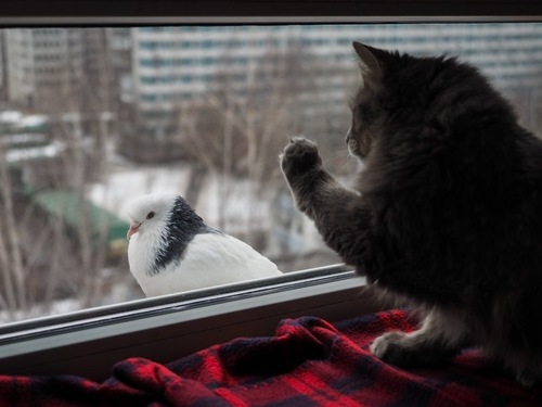 窓から鳥を見つけた猫
