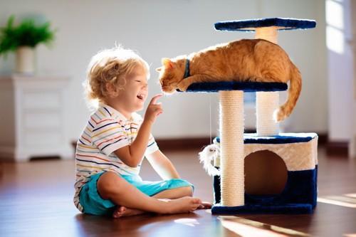 少年と一緒に遊ぶキャットタワーの上の猫