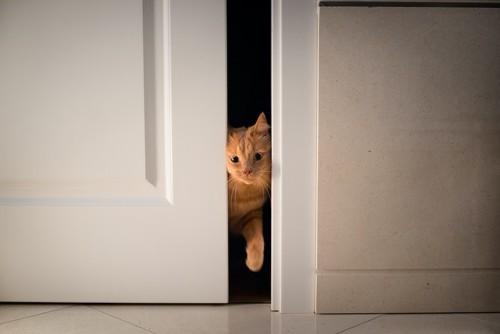 扉の隙間から顔を出している猫