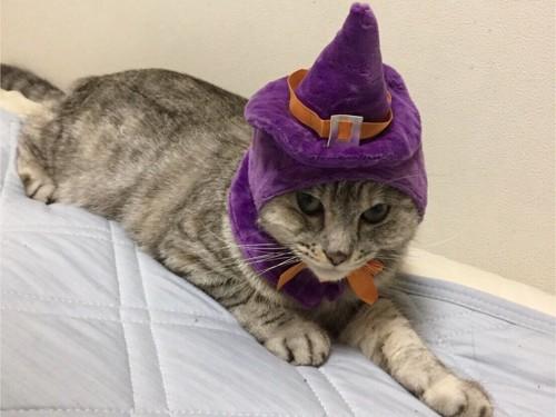 魔女の帽子をかぶった猫