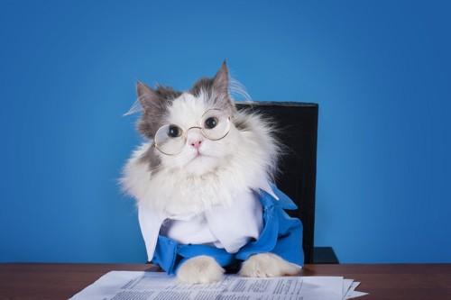 デスクに座る猫