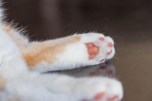 猫の後ろ足の肉球