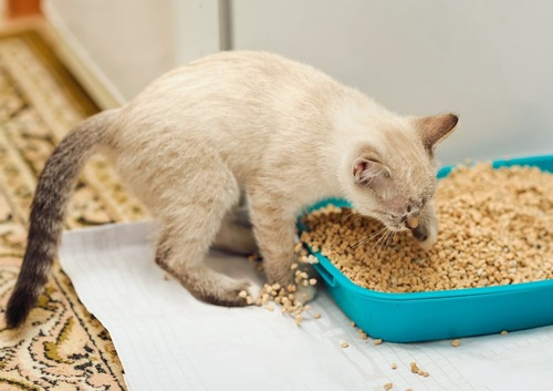 トイレの猫砂を掻き出す猫