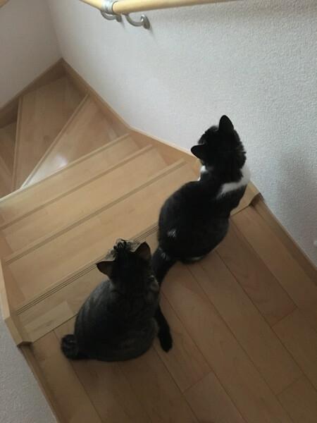 猫のあるある行動:整列好き