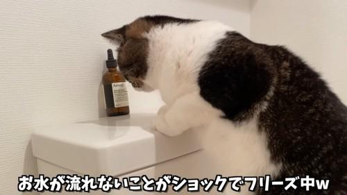 トイレのタンクを見る猫
