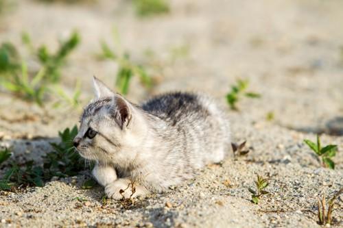 砂の上にいる子猫