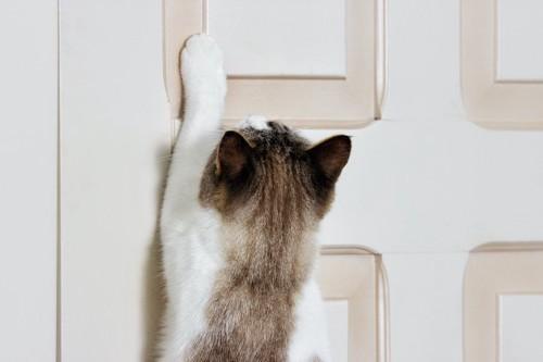ドアに手を伸ばす猫の後ろ姿