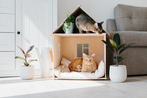 外出自粛と猫